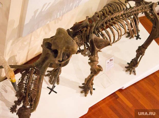 Ученые рассказали озагадочном черепе, найденном вЯНАО