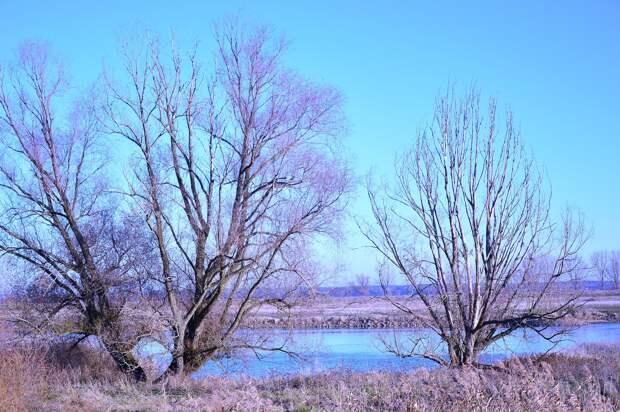Спасаясь от мужа-дебошира, пенсионерка переплыла реку в Удмуртии