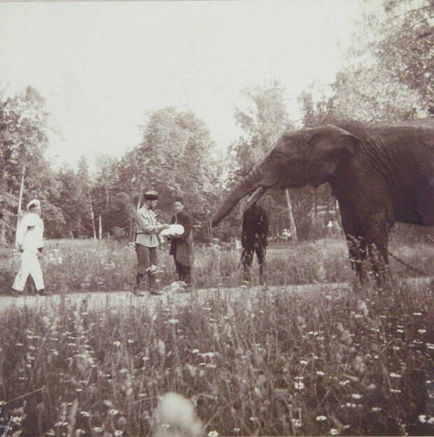 Слоны в царской России. Россия - родина слонов
