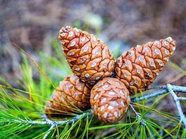 «РуссНефть» продолжает программу восстановления лесов