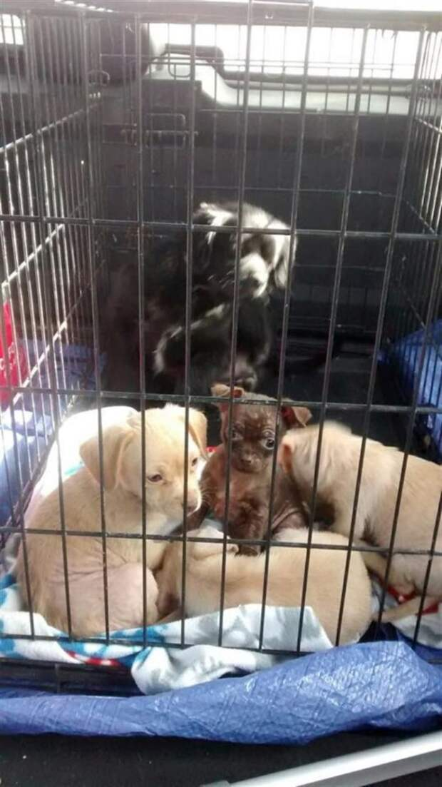 Водитель увидел, как собака царапает закрытую коробку на обочине и как будто плачет