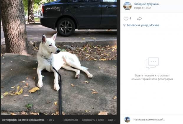 Фото дня: на Базовской нашли потерявшуюся собаку