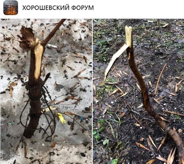 Незаконно высаженные деревья удалили с улицы Острякова