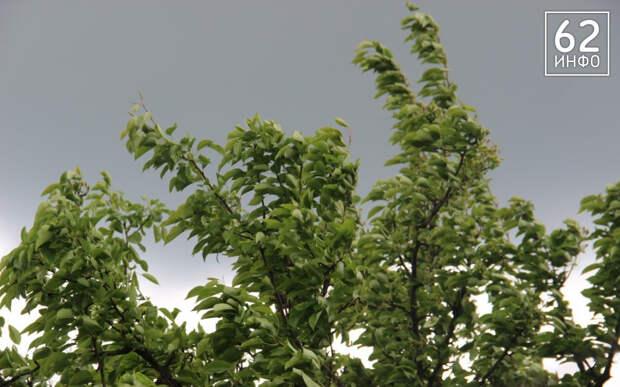 Ветер в Рязанской области усилится до 18 метров в секунду