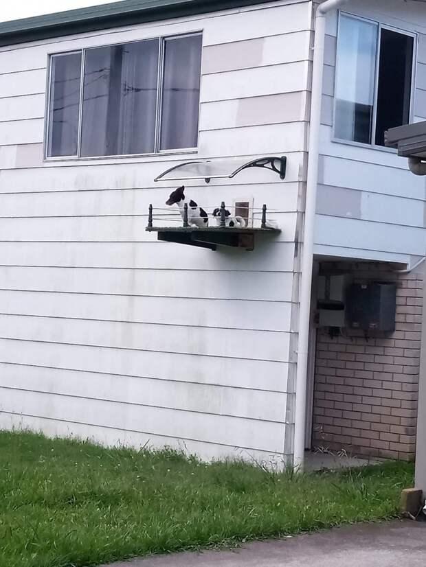 Прогулочный балкончик на одну мордочку