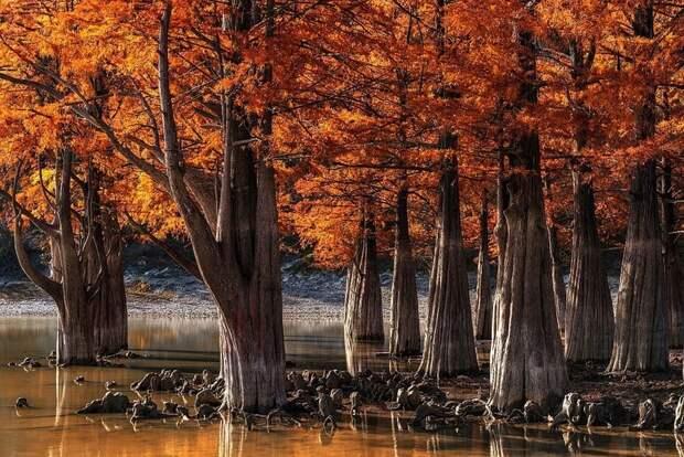 Фотографии победителей конкурса Wiki Loves Earth о красоте нашей планеты