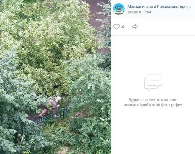 Рухнувшее после дождя дерево на 1-й Сестрорецкой убрали — управа