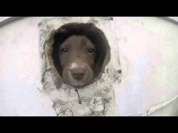 Щенков и взрослых собак бросили без еды и питья… Но спасатели смогли вызволить животных!