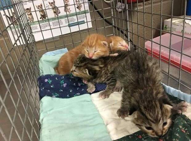 Отчаянная мать пришла к дверям спасателей, потеряв своих котят история, история спасения, коты, котята, кошка, кошки, мило, спасение животных