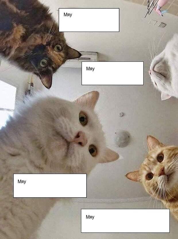 Если вам надоела ирония, посмотрите на эти 8 нормальных мемов