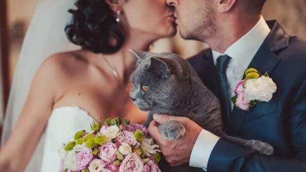 Кот, который нас поженил