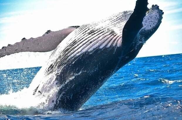 В Госдуму внесен законопроект, запрещающий вылов китов и дельфинов