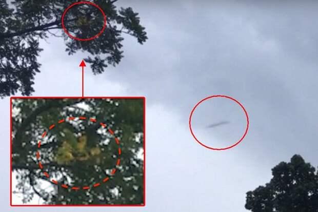 Двойная удача: снят одновременно НЛО и снежный человек