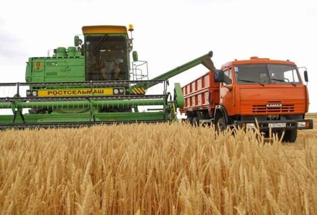 Китай отказывается пускать российскую пшеницу на свой рынок