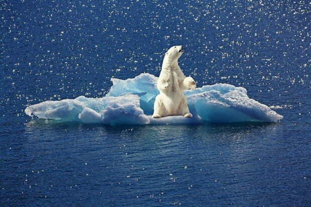 Один из крупнейших шельфовых ледников Антарктиды вот-вот рухнет
