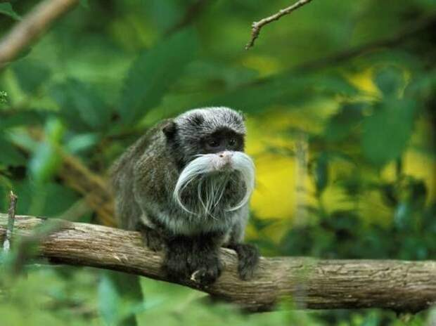 Всякое и разное Смешные фото : Дарвин может спать спокойно!