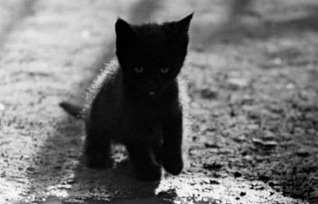 Котенок был прямо на дороге. Машины проезжали, пропуская его между колес. Но один остановился