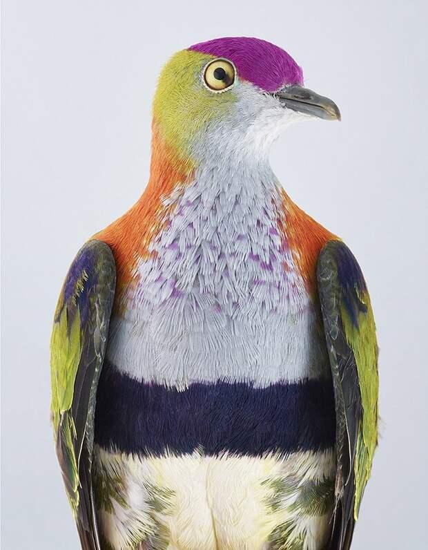 Портреты удивительно красивых птиц фотографа Лейлы Джеффрис