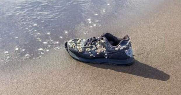 Почему на пляже в Канаде находят кроссовки с оторванными ступнями