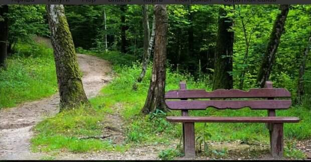 В Алёшкинском лесу появилась экотропа