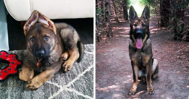 Как растут собаки
