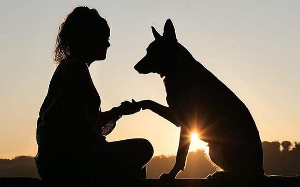 А вы знаете, что собаки видят красное- черным и способны учиться даже в утробе матери? Фото buddymantra.com