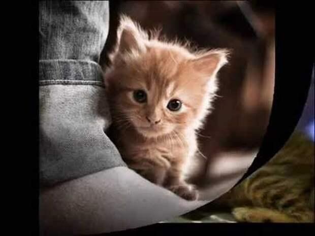 Позитивные котята для улыбки (12 фото)