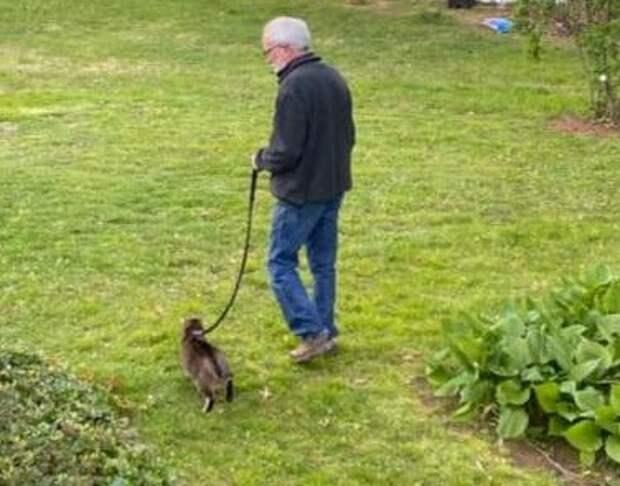 Доказательства того, что каждый мужчина должен построить дом, посадить дерево и завести кота