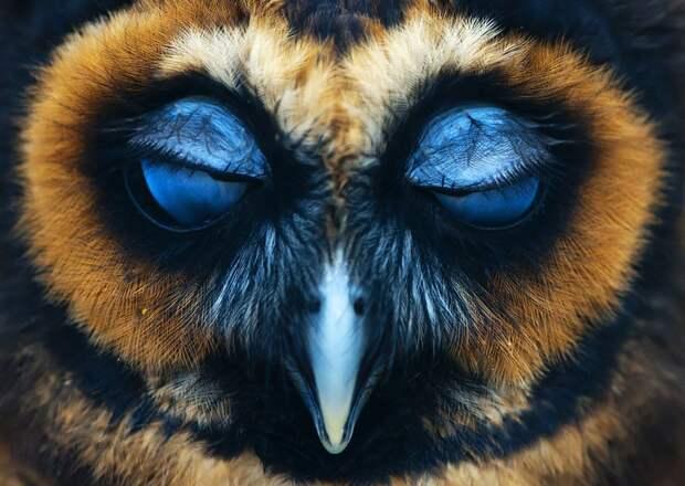 20 фотографий, которыми совы могут гордиться