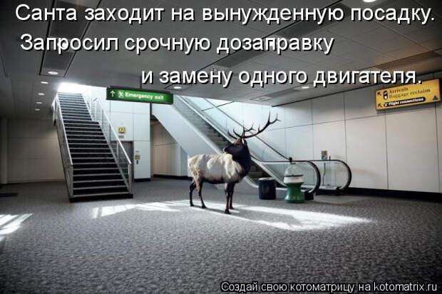 kotomatritsa_lg (640x426, 154Kb)