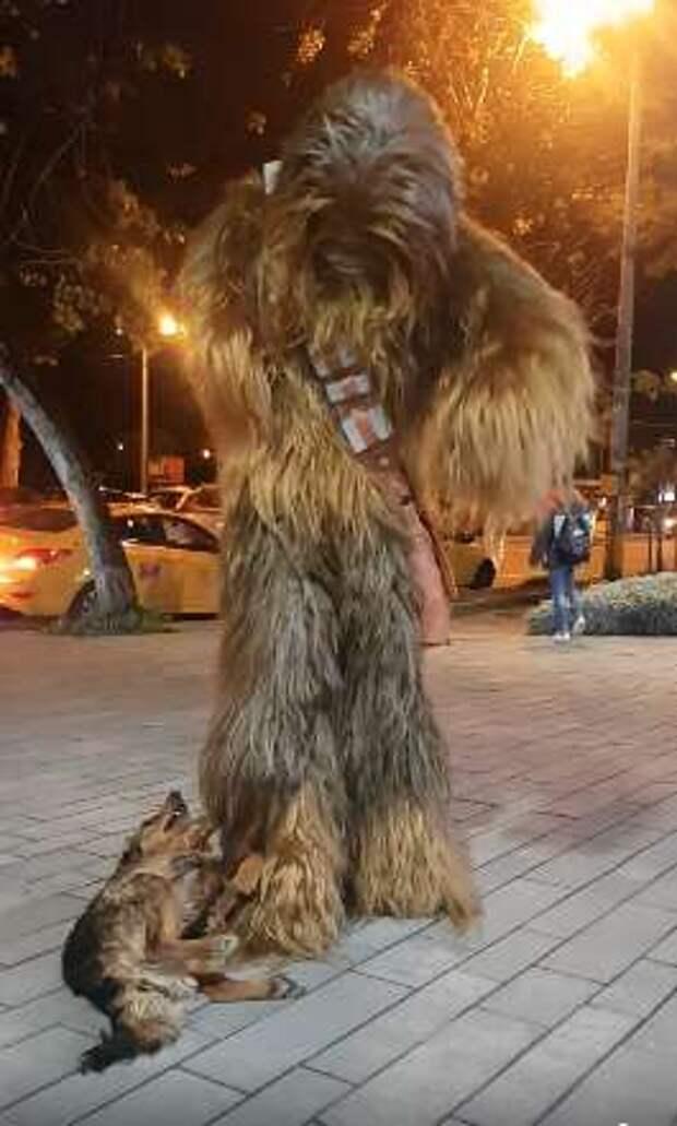 Пса не обмануть: питомец распознал хорошего человека даже в костюме Чубакки