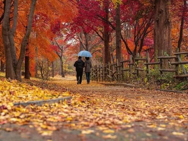 Москвичи смогут гулять в парках во время нерабочих дней