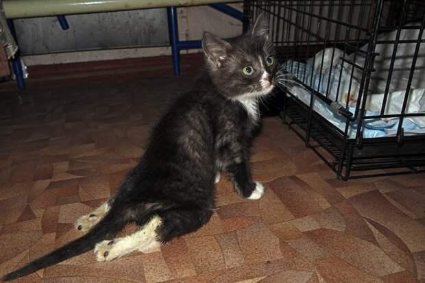 Зоозащитники выхаживают котенка, над которым издевались дети в Липецке