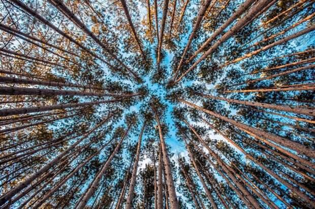 BGCI опубликовала отчет о плачевном положении деревьев на планете