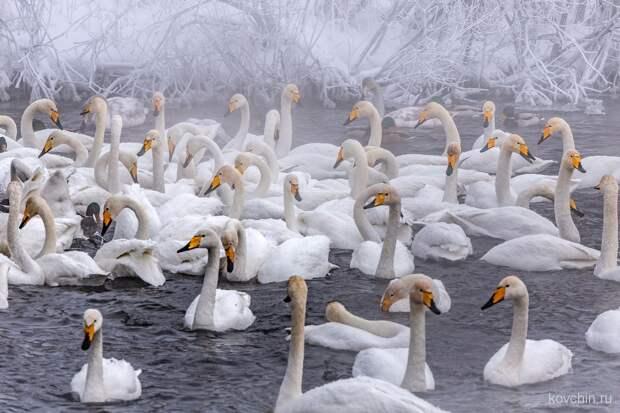 Красоты России. Лебединый заказник