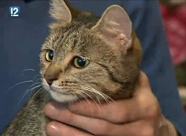 В Омске ветеринары выходили подстреленную кошку и купили ей инвалидную коляску