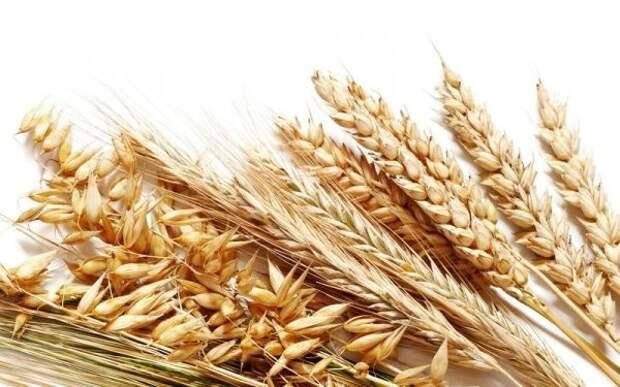 Пшенично-ячменный тест было, истории, прошлое