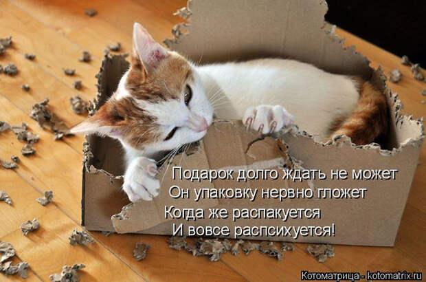 kotomatritsa_q (1) (700x463, 341Kb)