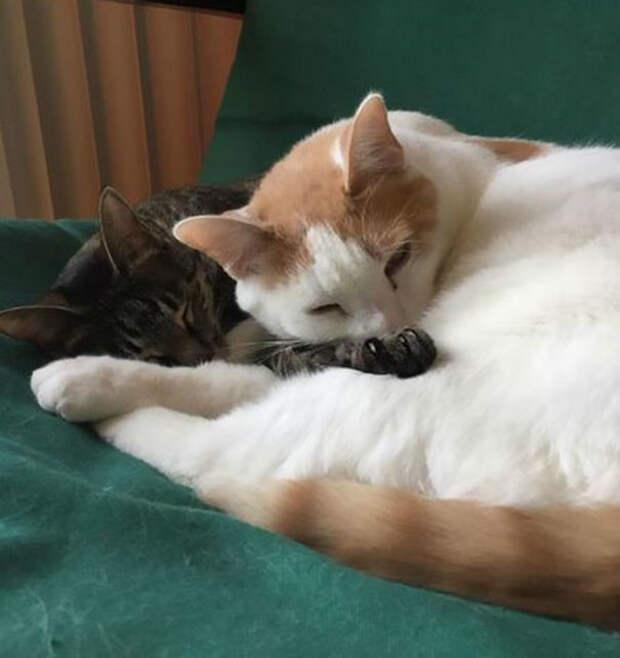 Теперь Феликс живет вместе с семьей Боулдин и их котом Гасом афганистан, животные, кошка