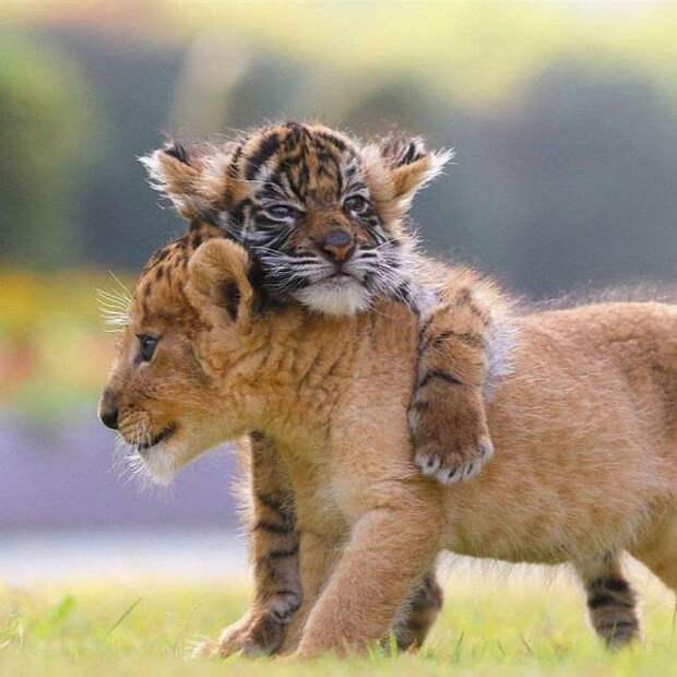 Эмоциональные фото с животными