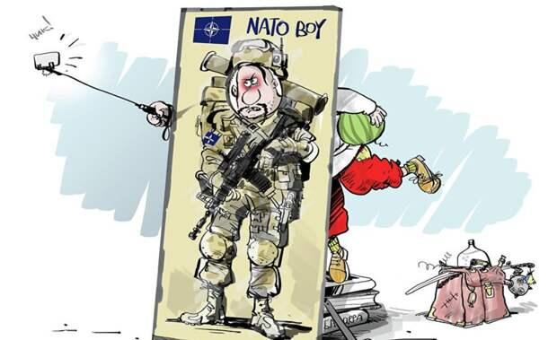 «Волки! Волки!» – в Киеве продолжают умолять НАТО «спасти от России»