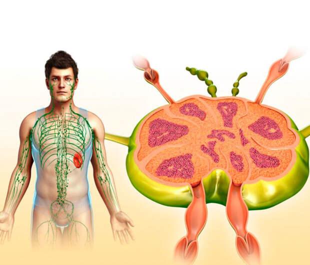 О чем расскажут воспаленные лимфоузлы