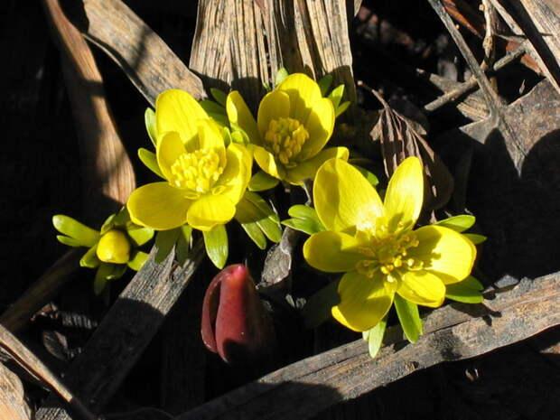 7 необычных весенних цветов: возможно, вы с ними еще не знакомы