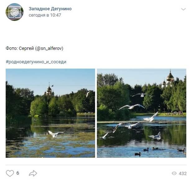 Фото дня: чайки на Дегунинском пруду
