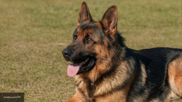 В США умерла собака, заразившаяся коронавирусом