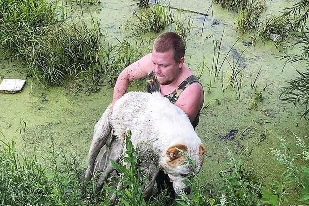 Не мог ни лаять, ни шевелиться: тонущую в болоте собаку спас мужчина