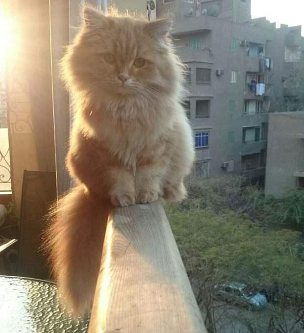 21. Еще один претендент на звание Котенок-2016 котики, мимими
