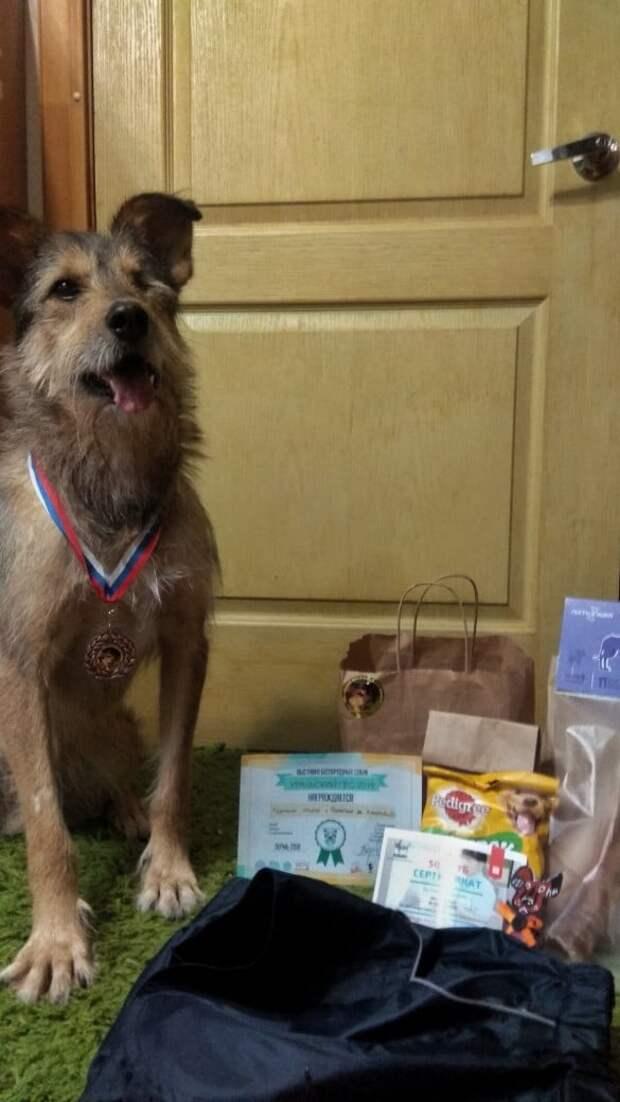собака с медалью