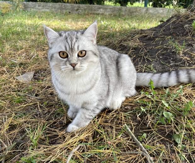 Кошка Майя