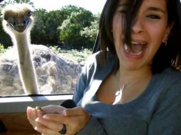 Мы, страусы, ужасно любопытны! в кадре, главные герои, животные, забавно, смешно, фото, юмор